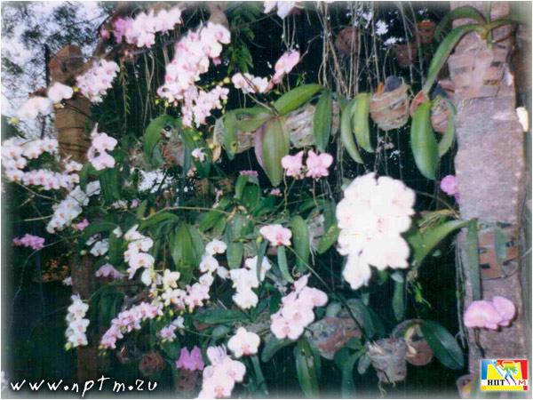 Индия - Россия 1996. Auroville photo.